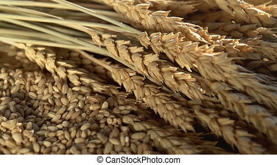 Rich Harvest of Grain - The camera moves slowly past the cut...