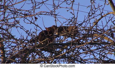 two cats  on spring apple tree