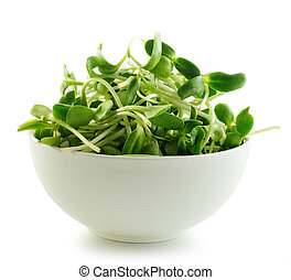 green young sunflower sprouts in the bowl isolated on white...