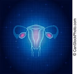 Uterus and ovaries anatomy blue background
