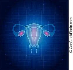 子宮, そして, 卵巣, 解剖学, 青, 背景,