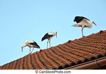 storks on the roof