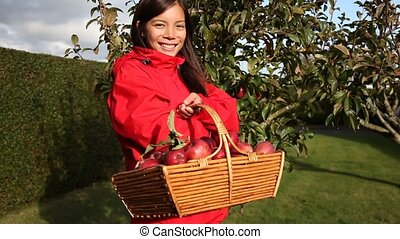 Apple woman - Collecting apples. Beautiful woman with a...