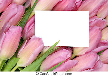 Tulips flowers in spring or mother's day with empty greeting car