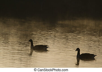 Goose Silhouette - beautiful Goose Silhouette with...