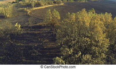Pine and poplar tree forest burnt area, aerial view - Aerial...