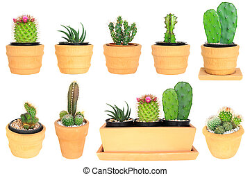 Many type of cactus isolated background