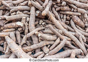 manioc, tapioca, cassava