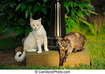Two Cats Outdoors - Two cats by a lamp post looking at...
