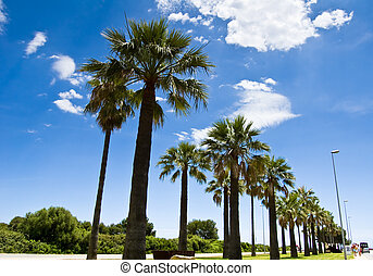 Palm-lined 1 - Beautiful palm-lined street under blue sky