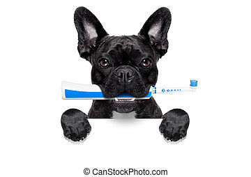 fogkefe, elektromos, kutya
