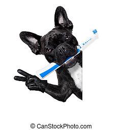 spazzolino, cane