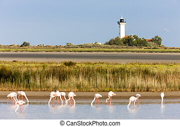 flamingos and Gacholle lighthouse, Parc Regional de...