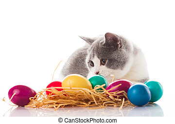 cat and easter eggs on white background. funny british...