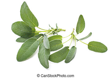 Sage leaves isolated on white - Bunch of fresh sage herb...