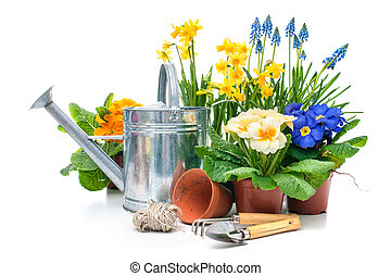 Spring flowers with gardening tools isolated on white...