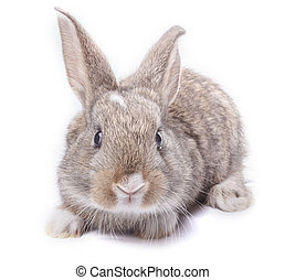 gray bunny sitting isolated on white background holiday...