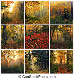Autumn - Collage made of images of fantasy autumn forest