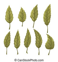 Set of green leaves on a white background