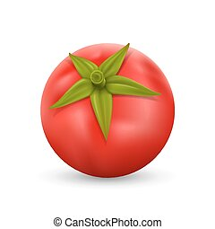 Tomato on white background art Vector illustration