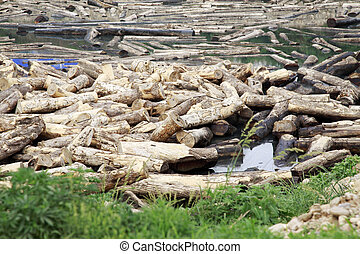 Wood soaking in the water, closeup of photo