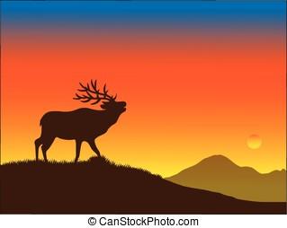 bull elk - vector, silhouette of a bull elk at sunset