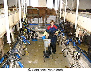 Milk Stand - picture of a young woman working on a dairy...