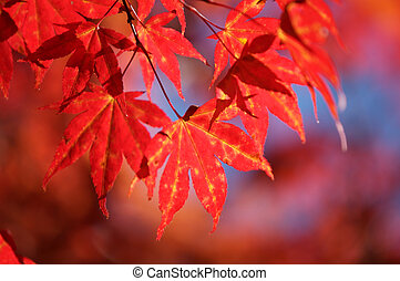 fall leaves - colorful leaves on a tree