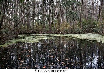 Swamp with trees and bushes, from the Okefenokee Swamp in...