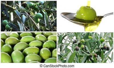 Olives montage - Collage including olive tree, olives...