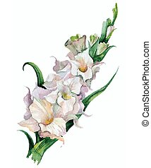 gladiolus flowers painted - Watercolor image of pink...