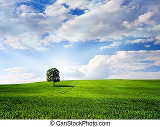 verde, naturaleza