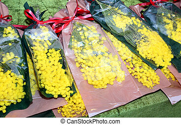 mimosa flowers for womens day on 8 March - yellow mimosa...