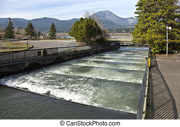 Fish ladders in Bonneville Oregon. - Fish ladders and...