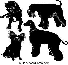 greyhound mastiff Miniature Schnauzer chihuahua