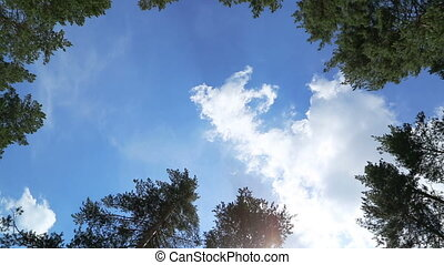 timelapse with clouds between tree tops