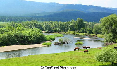 landscape with river between mountains and horses - summer...