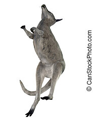 Eastern Grey Kangaroo - 3D digital render of an Eastern grey...