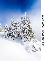 bedeckt, Schnee, kiefer, wald