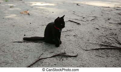 black cat sits on sand licks and goes away - black cat sits...