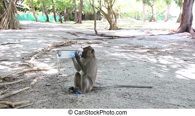 monkey sits on ground and drinks bottled water among trees...