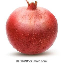 Juicy pomegranate Vector