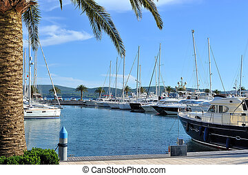 Marina with yachts and palms - Luxury marina Porto...