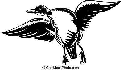 goldeneye duck - illustration of a wild duck