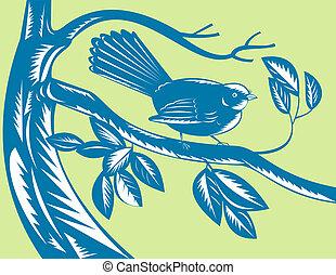New Zealand fantail bird on a branch