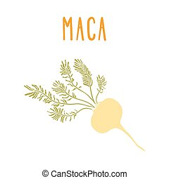 Maca root Vector EPS 10 hand drawn illustration