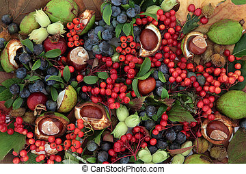 Natures Bounty - Autumn fruit and nut background border...