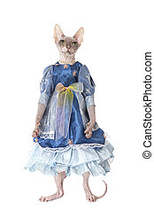Hairless Don Sphinx cat dressed as a doll in front of white...