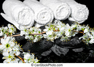 blooming twig of plum, white towels on zen stones with reflectio