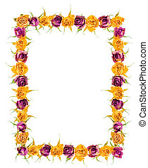 Beautiful frame of dried yellow and pink rose flowers is isolate